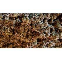 Dried Biomass, image 2