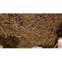 Dried Biomass, image 6